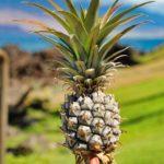 Les vertus de l'ananas 3